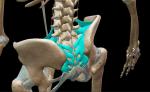 Hip sacrum ligaments 4